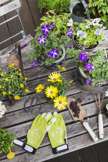 Different summer flowers and gardening tools on garden table - GWF05781