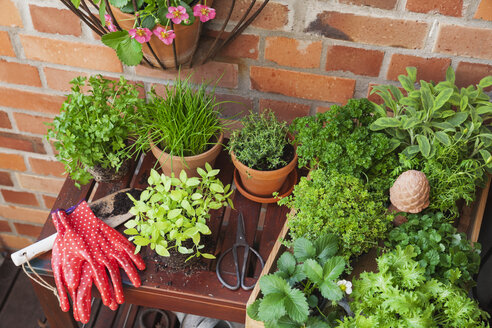 Various potted spice plants on terrace - GWF05786