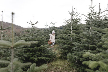 Girl carrying basket on a Christmas tree plantation - KMKF00723