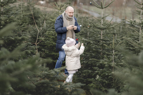 Father and daughter decorating Christmas tree on a plantation - KMKF00726