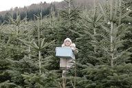 Girl carrying gift box on a Christmas tree plantation - KMKF00735