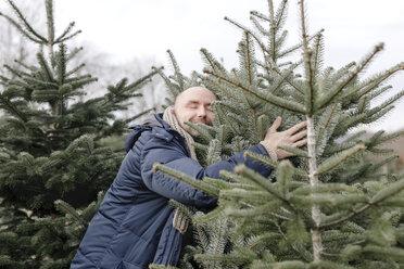 Arnsberg, NRW, Deutschland. Ein Mann wählt einen Weihnachtsbaum auf der Weihnachtsbaum-Plantage aus - KMKF00741