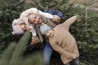 Arnsberg, NRW, Deutschland. Ein lachender Vater mit zwei Kindern auf der Weihnachtsbaum-Plantage - KMKF00744