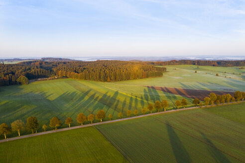 Germany, Bavaria, tree-lined country road near Dietramszell at sunrise, drone view - SIEF08348