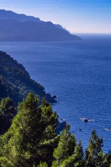 Spain, Baleares, Mallorca, coast near Sa Foradada - THAF02463
