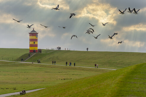 Ein Schwarm Nonneng�nse am Pilsumer Leuchtturm. Krummh�rn, Pilsum, Niedersachsen, Deutschland - FRF00797