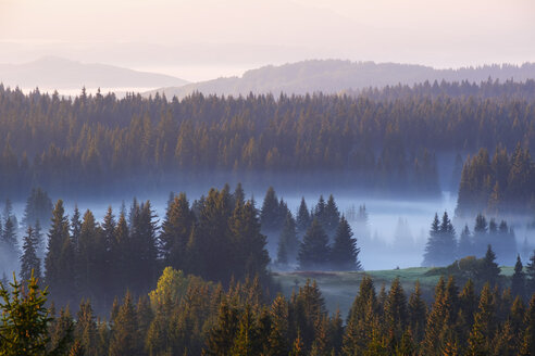 Montenegro, Durmitor National Park,forest in morning mist, view from Curevac - SIEF08357