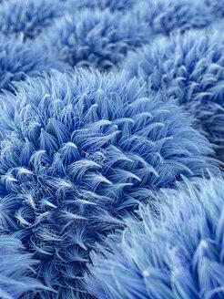 Blaue Hair Anemonen, 3D Rendering, digital generiert, Anemone, Haare, wuschelig, Kugel, Ball, Muster, abstrakt, Konzept, Idee, Innovation, Kreativität, HIntergrund, Entschleunigung, Inspiration, Individualität, Harmonie, Balance, Vision, Vertikal, blau - AHUF00547