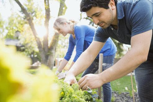 Couple tending to plants in vegetable garden - HEROF08052
