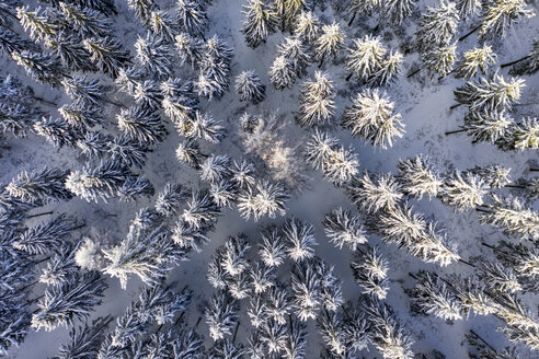 Germany, Hesse, Taunus, Aerial view of coniferous forest in winter - AMF06732
