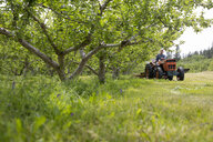 Male farmer driving tractor in orchard - HEROF08713