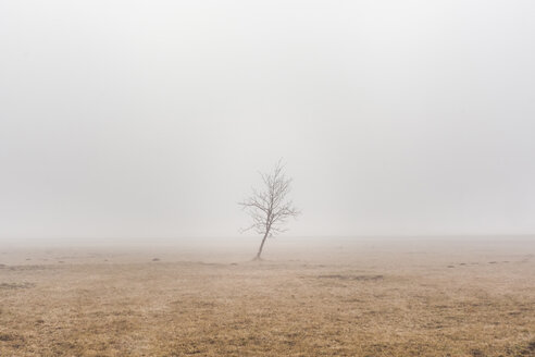 Slovenia, Begunje na Gorenjskem, rural area, lonely tree and fog in a winter day - FLMF00108