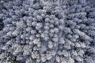 Germany, Baden-Wuerttemberg, Rems-Murr-Kreis, Swabian forest, Aerial view of forest in winter - STSF01829