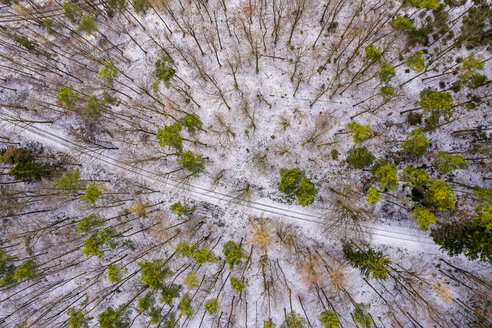 Germany, Baden-Wuerttemberg, Rems-Murr-Kreis, Swabian forest, Aerial view of forest in winter - STSF01832