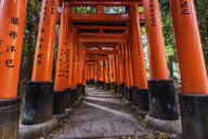View through red torii gates, Kyoto, Japan. - MINF10081