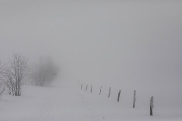France, Alsace, Nature reserve Frankenthal-Missheimle, snow-covered landscape at fog - SGF02223