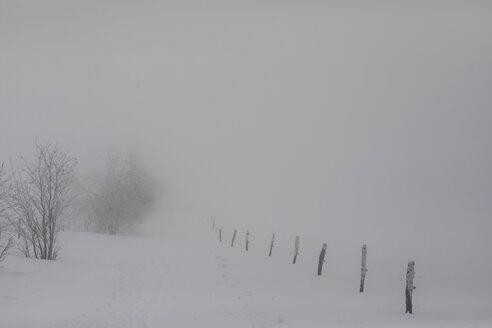 verschneiter Zaun mit Spur im Winter, Naturpark Frankenthal-Missheimle, Vogesen, Frankreich - SGF02223