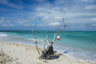 USA, Florida, Florida Keys, Dry Tortugas National Park, Fort Jefferson, Beach sculpture on a white sand beach in turquoise waters - RUNF01025