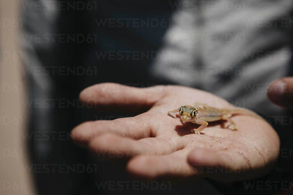 Namibia, Walvis Bay, gecko on woman's hand in Namib-Naukluft National Park - LHPF00428 - letizia haessig photography/Westend61