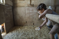 Boy feeding chicken in barn - HEROF11328