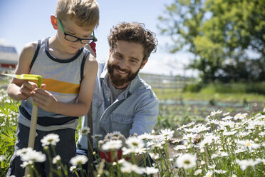 Father and son gardening, looking at daisies in sunny garden - HEROF11553