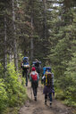 Friends hiking with backpacks and hiking poles on remote trail in woods - HEROF12357