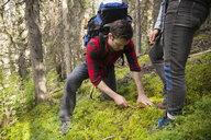 Male hiker cutting mushroom in woods - HEROF12366