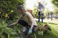 Senior father and daughter gardening, planing flowers in garden - HEROF12576