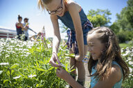 Sisters gardening, picking daisies in sunny rural garden - HEROF12663
