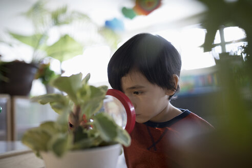 Curious preschool boy examining plant with magnifying glass - HEROF12753
