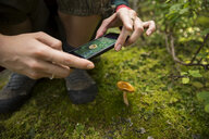 Close up female hiker with camera phone photographing mushroom in moss - HEROF13308