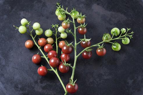 Risp tomatoes 'Black Cherry' on dark ground - CSF29214