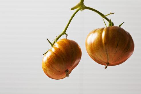 Chocolate Stripes Tomaten, Tomaten (Solanum lycopersicum), amerikanische Tomaten, Fleisch-Tomaten,braun-rot, gestreift,  heller Untergrund - CSF29235