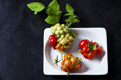 Cherry tomatoes 'Voyage' in a bowl on dark ground - CSF29259