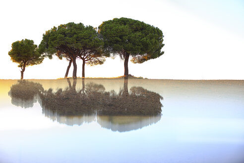 Pine trees and reflections - DSGF01783