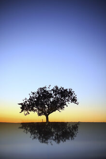 Silhouette and reflection of pine tree at sunrise - DSGF01786