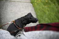 Seeing eye dog looking up at visually impaired woman on sidewalk - HEROF14638