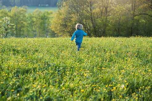 Boy running over a meadow with dandelions - SBOF01685