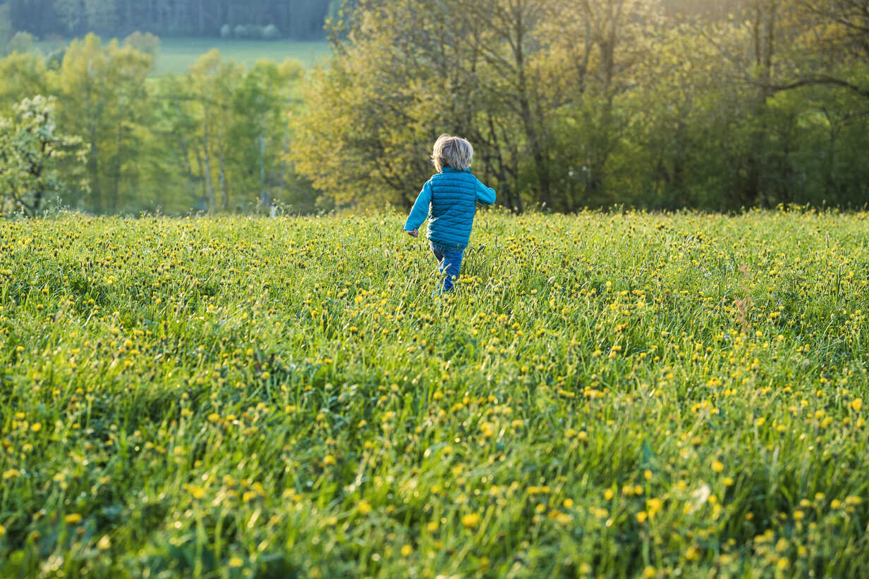 Boy running over a meadow with dandelions - SBOF01685 - Steve Brookland/Westend61