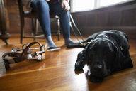 Black seeing eye dog laying on hardwood floor - HEROF15238