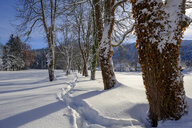 Germany, Bavaria, Bad Heilbrunn, tree-lined path in winter landscape - LBF02350
