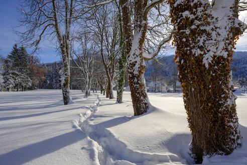 Germany, Bavaria, Bad Heilbrunn, tree-lined path in winter landscape - LBF02350