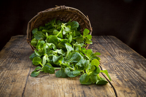 Lamb's lettuce in wickerbasket - LVF07746