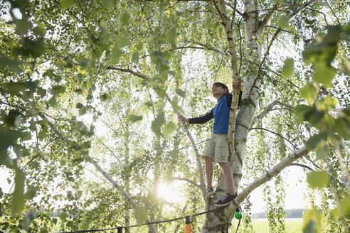 Boy climbing rural summer tree - HEROF18334