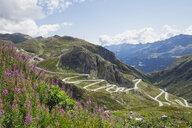 Switzerland, Ticino, Gotthard Pass, Fireweed in the foreground - GWF05847