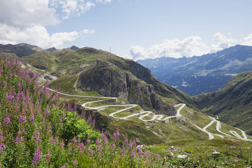Switzerland, Ticino, Gotthard Pass, Fireweed in the foreground - GWF05847