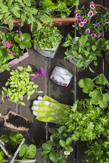 Planting herbs and flowers in to vintage storage pots for indoor farming - GWF05860