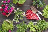 Planting herbs and flowers for indoor farming on a balcony - GWF05863