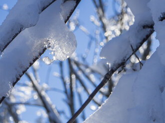 Snow-covered branches and twigs with frozen waterdrops, close-up - HUSF00008