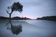 Spain, Cadaques, Costa Brava, water reflection of tree at dawn - DSGF01818